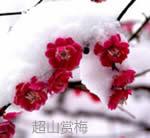 超山☆杭州超山风景区