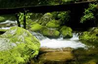 本溪綠石谷森林公園