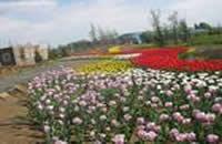 北京顺义国际鲜花港