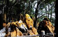 格薩拉綠石林