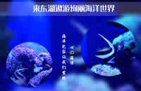 武汉东湖海洋世界