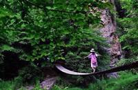 撫順玉龍溪森林公園