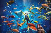 三亞亞特蘭蒂斯水族館