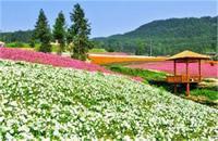 萬州鳳凰花果山