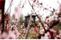 石家庄大自然园艺红樱花节