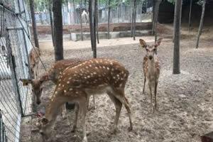 唐山兴润森林动物园