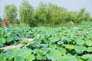連云港云水灣濕地公園