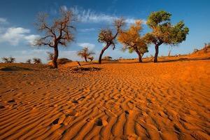 額濟納旗大漠胡楊林