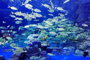 寧夏幻太奇海洋公園