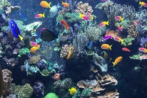 亳州海洋館