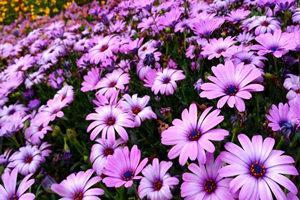 上海上房园艺梦花园