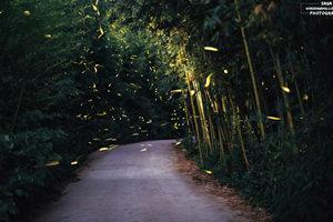 德清熒光水森林生態園