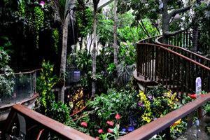 广州正佳雨林生态植物园