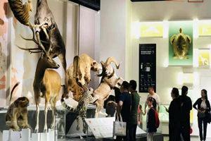 成都拾野自然博物館