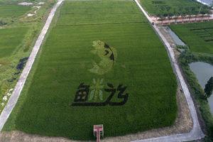 東莞古梅生態農業園
