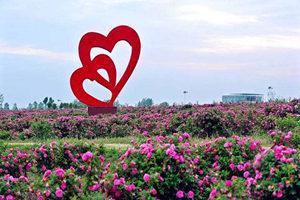 棗陽玫瑰海