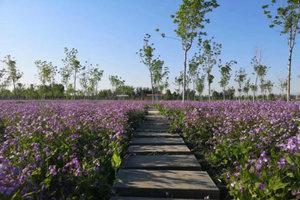 保定神农农业园