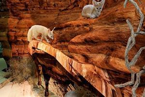 天津嚕哈森林動物園