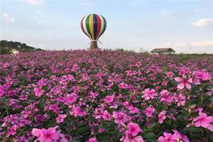 蘇州太湖花海主題度假樂園
