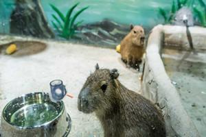 蘇州q寵樂園