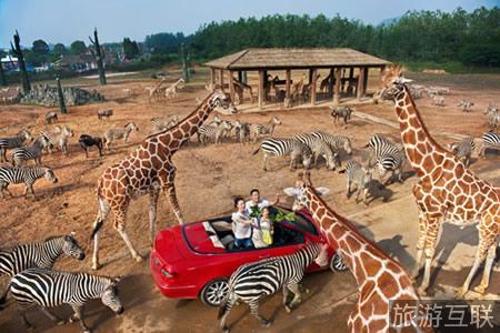 """杭州野生动物世界""""百兽狂欢节""""来了"""