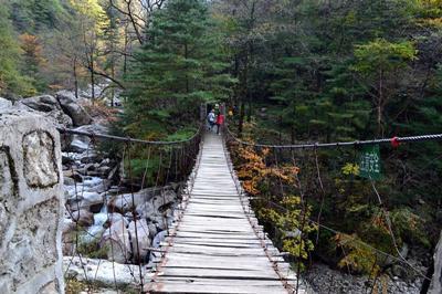 [推荐] 太白青峰峡森林公园好玩吗?青峰峡森林公园怎么样?图片