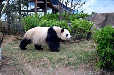 宿州野生动物园门票特价29.9元,就2天7月7日-7月8日