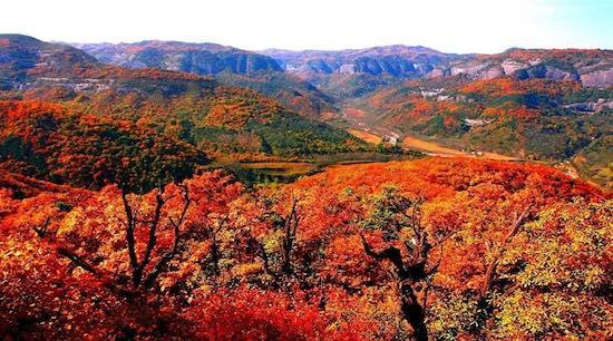十·一铜川旅游,照金香山的秋季正在绽放