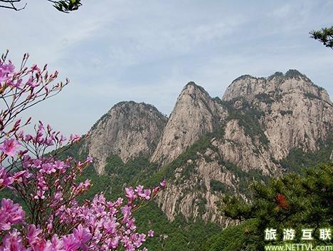 安庆岳西明堂山春季有什么花?明堂山风景区杜鹃花开了