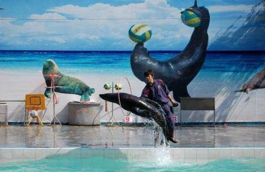 绍兴到新昌海洋城海洋公园怎么走?新昌海洋乐园自驾车