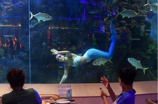 厦门梵尔纳海底餐厅有多大?