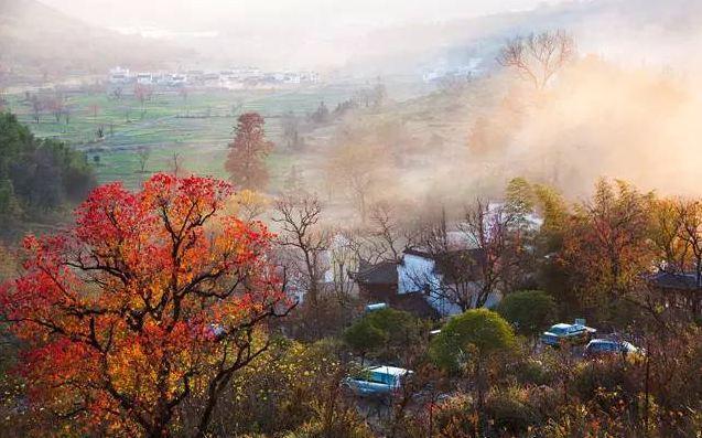 柠檬可乐 回复于2018-10-20 11:32:15 2018塔川红叶景观预报 据观测统计,塔川红叶开始出现为10月25日左右,至11月15日左右达到最大范围,维持至11月25日后,随着最低气温的逐渐下降而逐渐脱落,与其适宜生长气温相对应。11月15日-25日是分布范围最广、观赏性最佳的时段。 根据最新气象观测资料和气候预测,截至目前最低气温较常年偏高,今年秋季气温较常年偏高,红叶出现时间将推迟,红叶维持时间较常年偏长。  结论:最佳观赏时间11月份。 塔川以乌桕树为主,按照乌桕树的生长习性,最低温度在