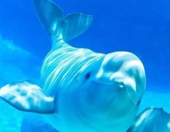 徐州海底世界有什么特色