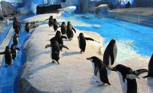成都极地海洋世界5.19旅游