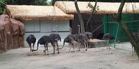 中山紫马岭动物园动物表演时间?