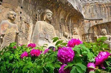 """每年四五月份的洛阳,就是牡丹花的世界,尤其在牡丹文化节期间,""""唯有"""