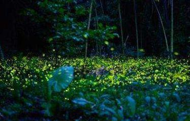 邛崃天台山萤火虫观赏期?天台山萤火虫最佳观赏时间?