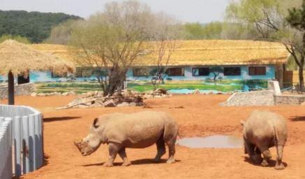 沈阳野生动物园6月活动?6月沈阳森林动物园票价?