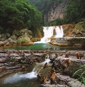 晋城蟒河风景区猕猴文化