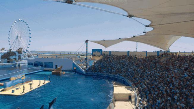 2018乐岛海洋公园海豚音乐节开始了 2018年6月23日至24日,海豚音乐