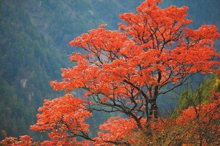 毕棚沟风景区红叶最佳观赏时间?毕棚沟红叶什么时候最美?