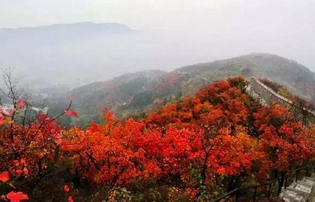 临安大明山风景区红叶最佳观赏