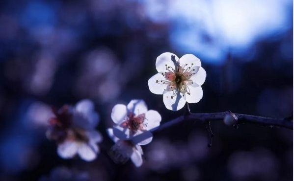 余杭超山风景区梅花花期?杭州超山梅花几月最美?